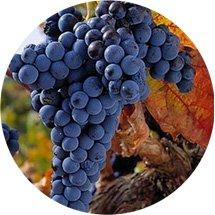 Resultado de imagen para uva tempranillo